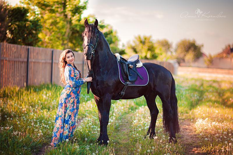 купить фризскую лошадь в московской области