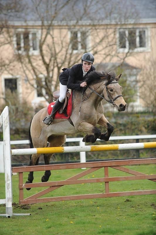 Ongekend Paarden te koop - Connemara pony Paard Ierland Springen Te koop JW-63