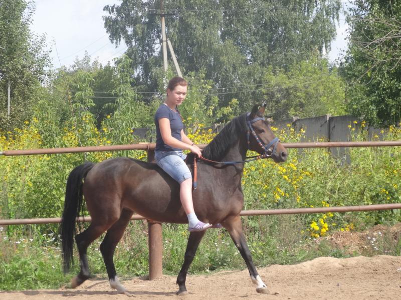 Paarden en Ponys te Koop Paarden te Koop Niet
