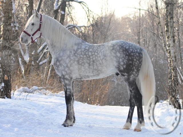 http://millionhorse.com/horse/photos/712/1791b.jpg