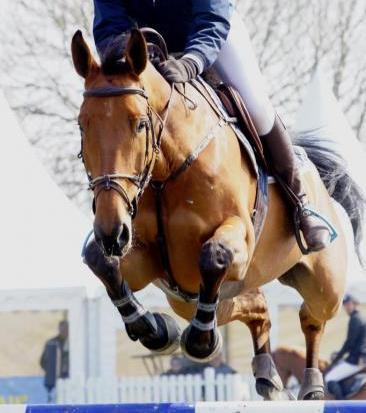 myydään bootsit hevoselle